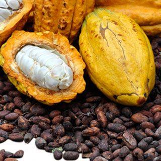 thalassa cacao